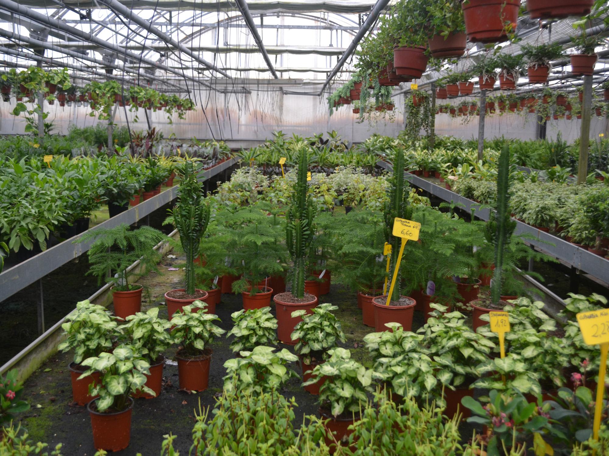 invernadero de plantas ornamentales imartec servicios