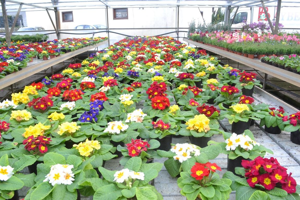 Invernadero de plantas ornamentales imartec servicios for Flores ornamentales exterior